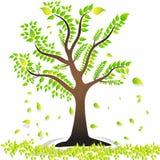 Uma árvore com as folhas verdes das folhas bonito treebroken as folhas fotografia de stock royalty free