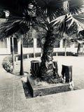 Uma árvore com cilindros abaixo foto de stock