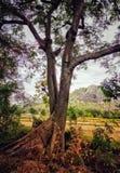 Uma árvore com duas hastes imagem de stock royalty free