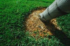 Uma árvore com grama Imagem de Stock