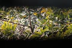 Uma árvore com lotes das folhas em um dia ensolarado Fotos de Stock Royalty Free