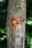 Uma árvore com teste padrão coração-dado fôrma Foto de Stock Royalty Free