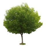 Uma árvore com uma terra branca Imagem de Stock Royalty Free