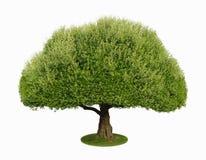 Uma árvore com uns 2 brancos Foto de Stock Royalty Free