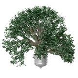 Uma árvore com verde sae do crescimento do copo do bulbo Ilustração Stock