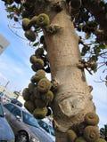 Uma árvore completamente dos frutos fotografia de stock royalty free