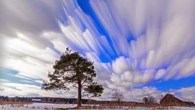 Uma árvore cresce no campo blurry Lapso de tempo 4K filme