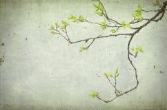 Uma árvore da filial do alperce com folhas Fotografia de Stock Royalty Free