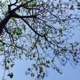 Uma árvore da mola com flores cor-de-rosa Fotos de Stock Royalty Free