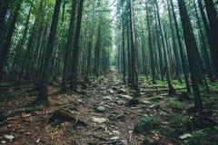 Uma árvore da natureza Caminho na floresta com fundos da luz solar foto de stock royalty free