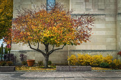 Uma árvore da queda Imagem de Stock Royalty Free