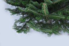 Uma árvore de abeto undecorated verde imagem de stock royalty free
