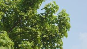 Uma árvore de bordo Fotos de Stock