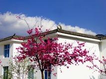 Uma árvore de cereja na parte dianteira de uma casa imagens de stock