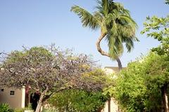 Uma árvore de coco torcida Fotos de Stock Royalty Free