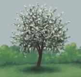 Uma árvore de maçã Fotografia de Stock Royalty Free