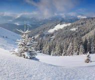 Uma árvore de Natal pequena coberta com a neve em montanhas do inverno Fotos de Stock Royalty Free
