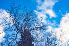 Uma árvore de ramificação contra o céu imagens de stock