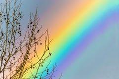 Uma árvore de rolamento do fruto contra fundos da cor do arco-íris Foto de Stock