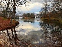 Uma árvore e o lago sob o céu azul Imagens de Stock