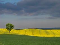 Uma árvore e os campos Fotografia de Stock Royalty Free