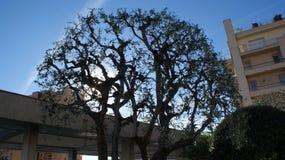 Uma árvore e uma casa em Mônaco Imagem de Stock