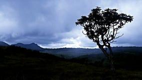 Uma árvore e uma escuridão Fotos de Stock Royalty Free