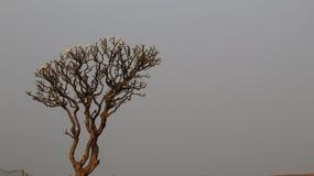 Uma árvore em montanhas foto de stock royalty free