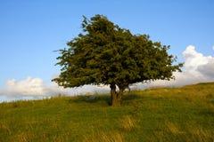 Uma árvore em um campo - Lancashire foto de stock