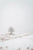 Uma árvore em um campo nevoento do inverno. fotografia de stock royalty free