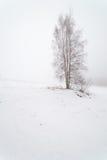 Uma árvore em um campo nevoento do inverno. imagem de stock