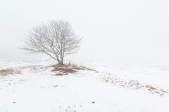 Uma árvore em um campo nevoento do inverno. fotografia de stock
