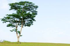 Uma árvore em um monte Foto de Stock Royalty Free
