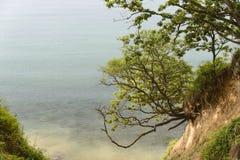 Uma árvore em um penhasco Foto de Stock Royalty Free