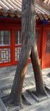 Uma árvore estranha Fotos de Stock