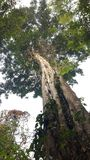 Uma árvore grande Fotos de Stock Royalty Free