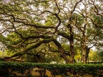 Uma árvore grande Fotos de Stock