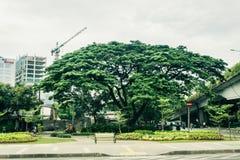 Uma árvore grande em uma mosca próxima do jardim da cidade sobre com processo da construção civil como o fundo Jakarta recolhido  Fotografia de Stock Royalty Free