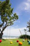 Uma árvore grande entre as bolas coloridas pequenas na manhã Fotos de Stock Royalty Free