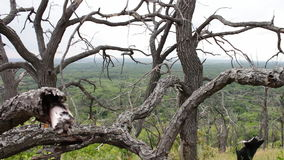 Uma árvore inoperante com ramos curvados Atmosfera Mystical Um lugar delével Filiais de árvore torcidas Aquecimento global E filme