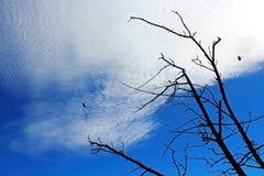 Uma árvore inoperante e o céu azul fotos de stock