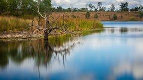 Uma árvore inoperante em um lago fotos de stock