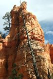 Uma árvore inoperante inclina-se contra uma rocha Fotos de Stock