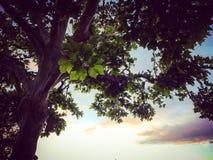 Uma árvore mostra sua beleza no por do sol imagem de stock
