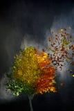 Uma árvore muda com tempo Foto de Stock Royalty Free
