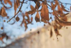 Uma árvore na cidade no inverno Fotografia de Stock Royalty Free