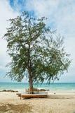 Uma árvore na costa fotografia de stock royalty free