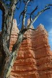 Uma árvore na frente dos azarentos Imagem de Stock Royalty Free