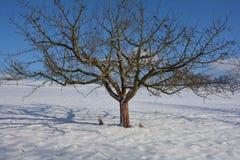 Uma árvore na neve com céu azul Foto de Stock Royalty Free