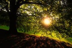 Uma árvore na noite do outono Imagem de Stock Royalty Free